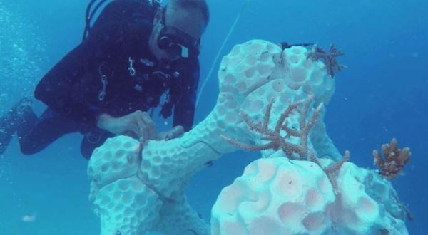 3D打印人造珊瑚礁,冀恢复海洋生态