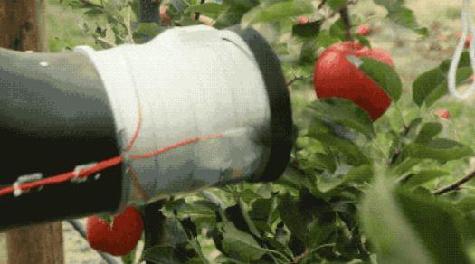 机器人摘苹果